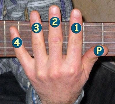 Numérotation des doigts de la main gauche