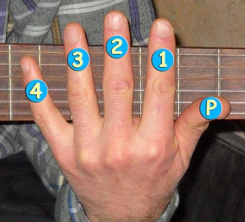 Guitare : numérotation des doigts de la main gauche (chez le droitier)